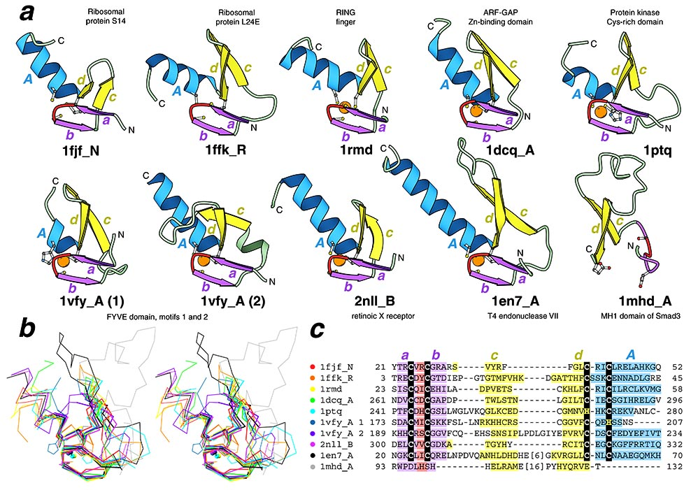 Structural comparisons of  Labeled Ribosome Structure